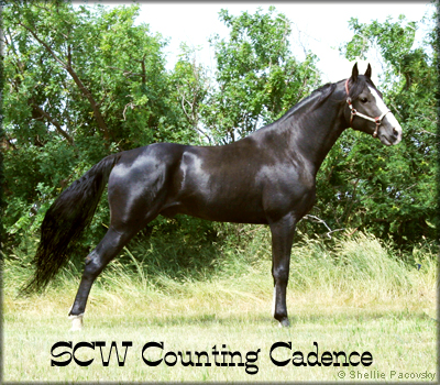SCW COUNTING CADENCE #20700732