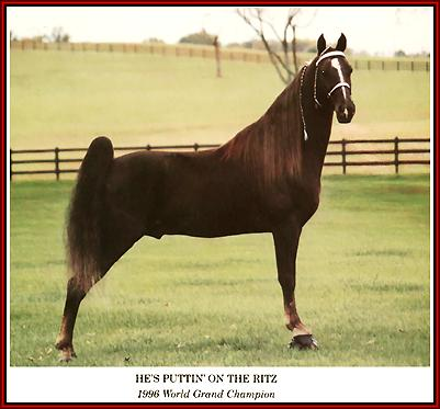 eaeb47c203e33 Tennessee Walking horse - He's Putting On The Ritz #910382 home page ...