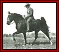 Merry Go Boy - 1947 and 1948 World Grand Champion