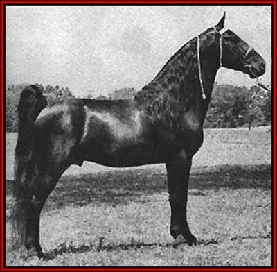 Tennessee Walking Horse - Midnight Sun #410751, home page by Walkers