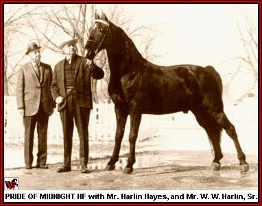 Pride Of Midnight and Harlin Hayes and W W Harlin, Sr.