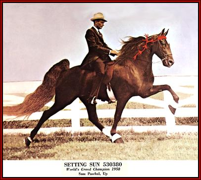 Tennessee Walking horse - Setting Sun #530380 home page by Walkers