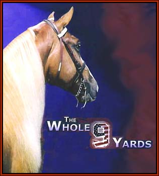 The Whole Nine Yards, the 2003 World Grand Champion Tennessee Walking Horse.