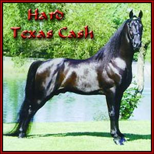 Hard Texas Cash