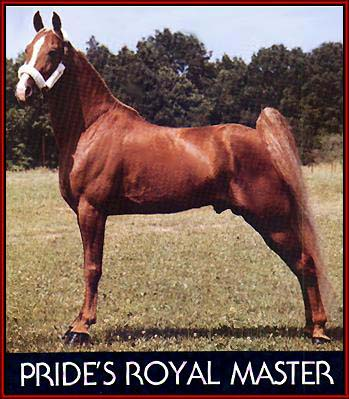 Pride's Royal Master