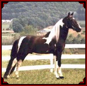 Tennessee Walking horse - - Pictures of Famous Walking Horses 3