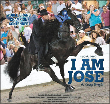 Tennessee Walking Horse I Am Jose 20806071 Home Page By